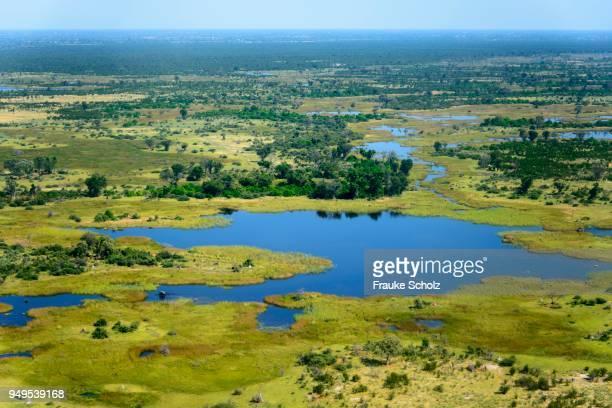 aerial view, okavango delta, botswana - okavango delta stock photos and pictures