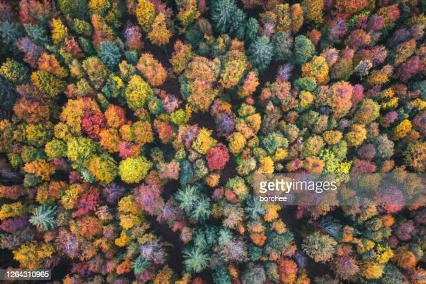 vista aerea sulla foresta autunnale - bicolore colore foto e immagini stock