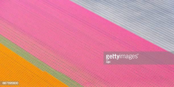 Luchtfoto op gebied van Oranje en roze tulp bloemen groeien in het voorjaar in Nederland