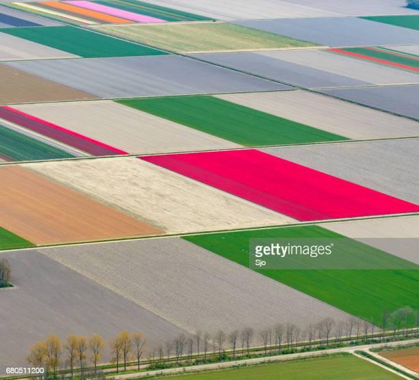 Luftbild auf Feldern der Tulpe Blumen wachsen im Frühling in Holland