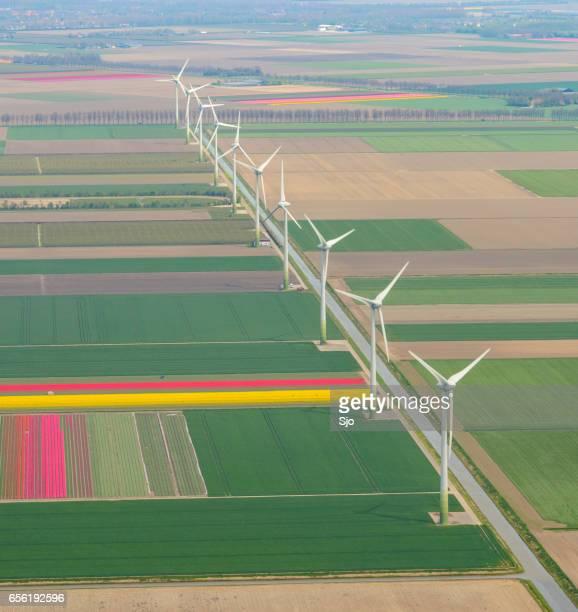 luchtfoto op de velden van de tulp bloemen en windturbines - flevoland stockfoto's en -beelden