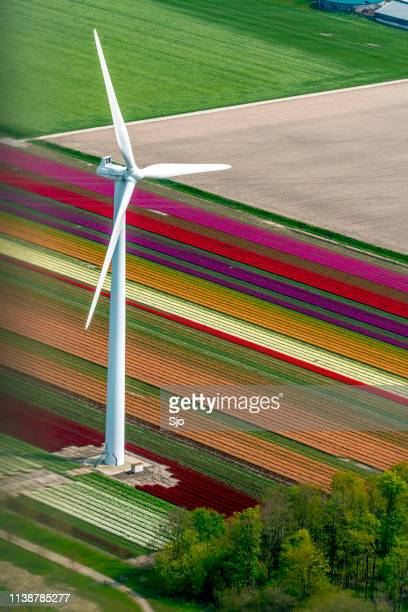 Aerial view on wind turbines in front of fields of tulip flowers growing in spring in Holland