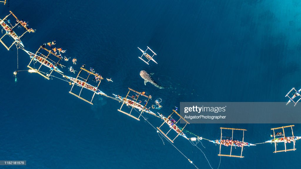 Aerial view Oslob Whale Shark Watching, Fishermen feed gigantic whale sharks ( Rhincodon typus) from boats in the sea in the Oslob, Cebu, Philippines. : Stock Photo