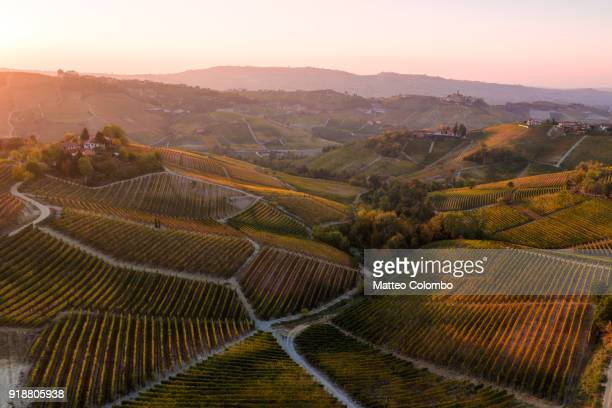 aerial view over le langhe vineyards in autumn, piedmont, italy - cittadina foto e immagini stock
