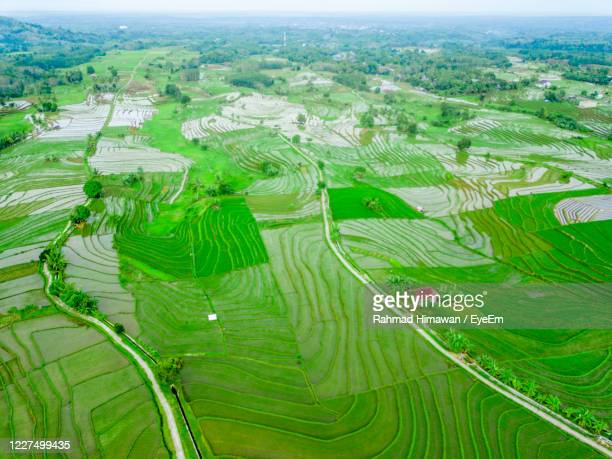 aerial view panoramic green rice fields - rahmad himawan stock pictures, royalty-free photos & images