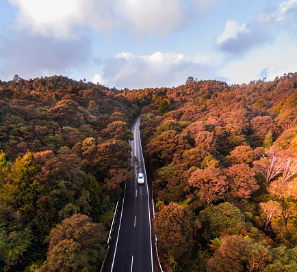 Aerial view road cutting through forest. - gettyimageskorea