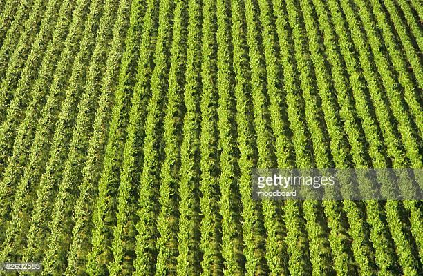 Vineyard Vines Wallpaper Premium Pictures Photos Images
