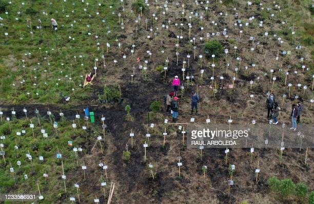 Aerial view showing relatives of Covid-19 victims spreading their ashes in holes where they plant trees during a tribute to their loved ones and as...
