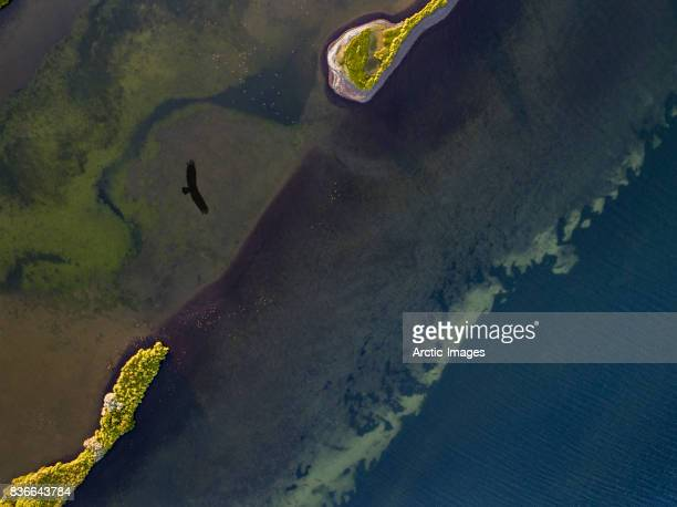 Aerial view- Silhouette of a bird flying over water