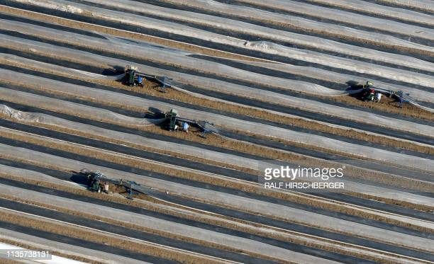 TOPSHOT Aerial view taken on April 8 2019 shows workers hasvesting asparagus that is growing under plastic foils in a field in Beelitz eastern...
