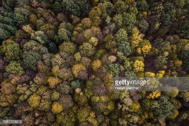 Aerial view to a deciduous wood on November 02 2018 in Melaune Germany