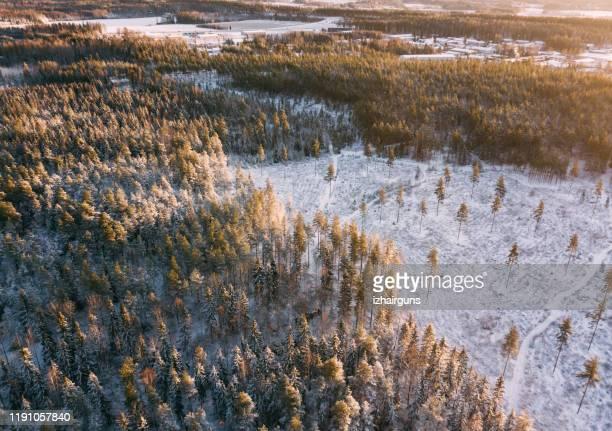 flygvy till vinter skog vid solnedgången - vildmark bildbanksfoton och bilder