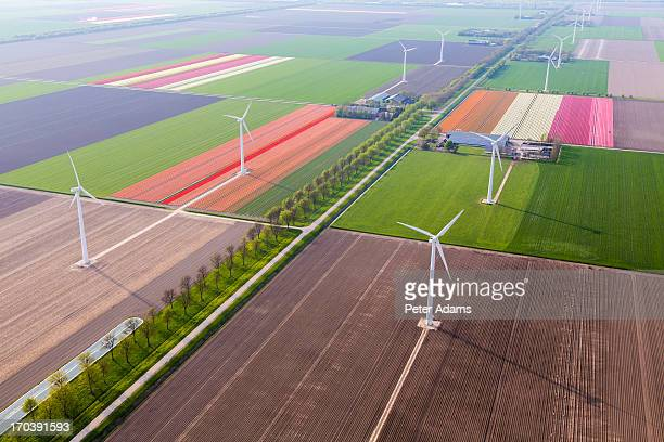 Aerial View Wind Turbines & Tulip Fields, Holland