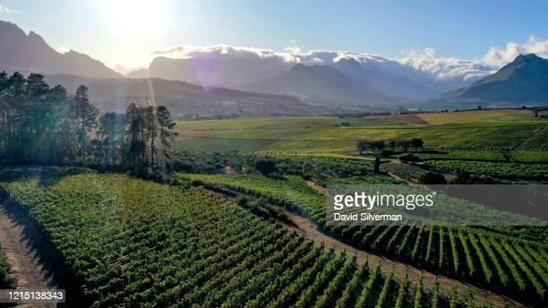 Aerial views of the vineyards at winemaker Ginny Povell's Protea Farm estate in Devon Valley on February 28 2020 in Stellenbosch in the Western Cape...