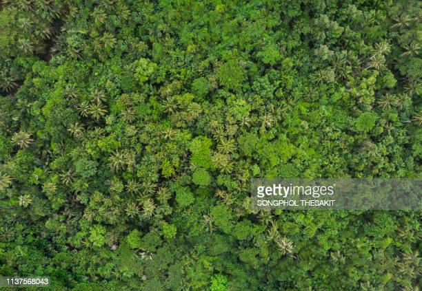 aerial view/the lush forests are rich in trees that produce oxygen to the world. - gras stock pictures, royalty-free photos & images