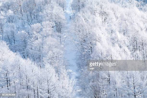 aerial winter forest and snow scenes. - 自然美 ストックフォトと画像
