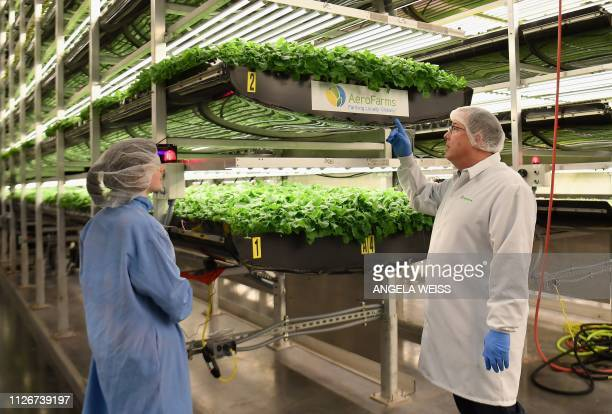 AeroFarms cofounder and chief marketing officer Marc Oshima checks baby kale grown in a vertical grow tower on February 19 in Newark New Jersey...