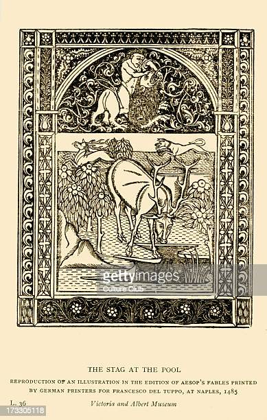 Aesop 's fables the Stag at the Pool Illustration after 1485 edition printed in Naples by German printers for Francesco del Tuppo Reproduction Aesop...