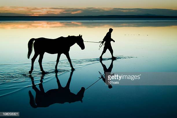 aesthetic - working animal stock pictures, royalty-free photos & images