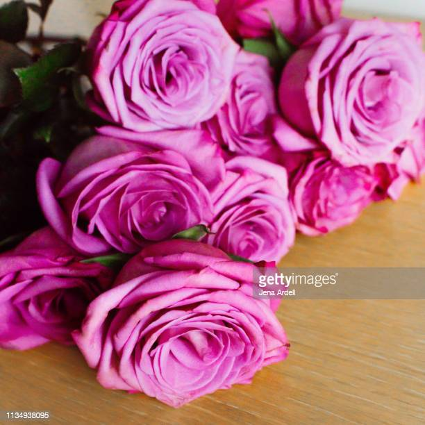 aesthetic, purple roses, rose, roses, bouquet, bouquet of roses - jena rose stock pictures, royalty-free photos & images