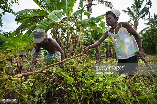 aeta indigenous people working in a field as laborers - jacob muehe stock-fotos und bilder