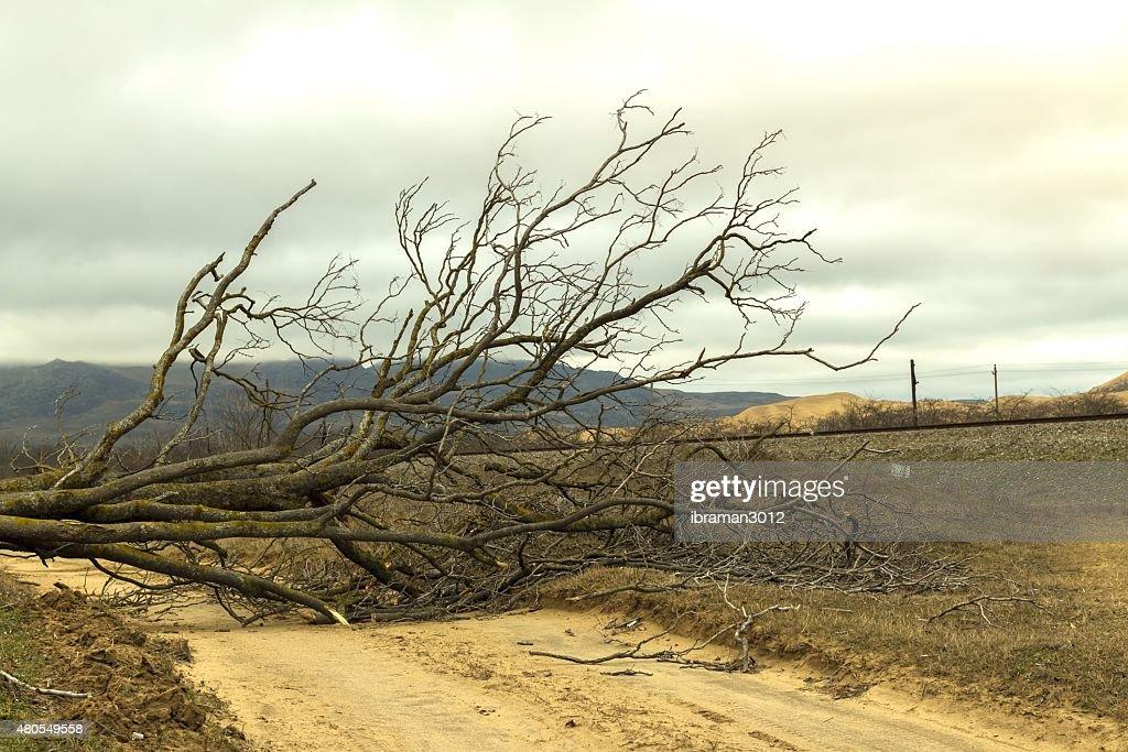 Afallen tree on the road : Stock Photo