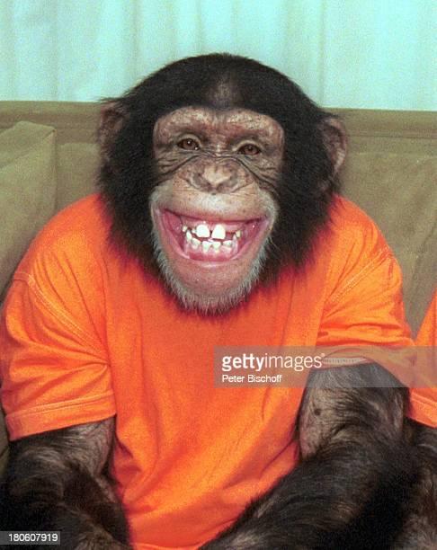 Affe Baxter neben den Dreharbeiten zur ZDFSerie'Unser Charly' 100Folge Schimpanse lachenPrNr 541/2002