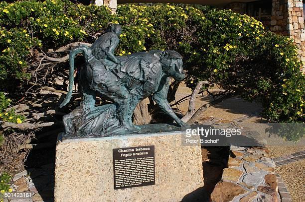 AffenStandbild 'Chacma baboon' im Nationalpark am 'Cape Point' am Kap der Guten Hoffnung bei Kapstadt Südafrika Afrika Reise NB DIG PNr 1299/2005