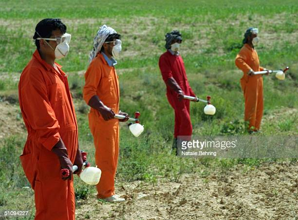 Afghan Men Armed With Insecticide Prepare To March In Formation Through A Locust-Infested Field May 4, 2002 Near Paiga Tash In Samargan Province....