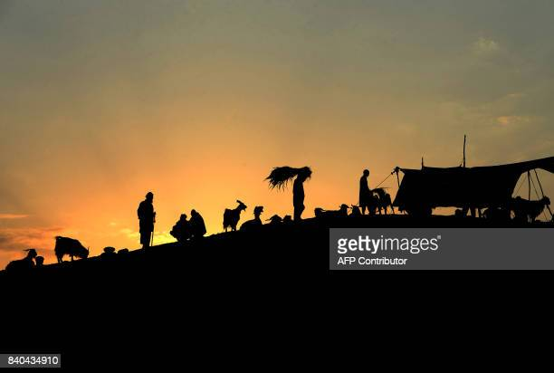 TOPSHOT Afghan men shop for livestock at a market ahead of the Eid alAdha Muslim festival on the outskirts of Jalalabad on August 29 2017 Muslims...