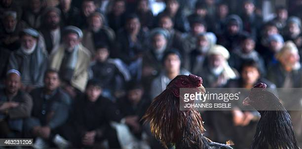 Afghan men watch a cockfighting tournament in Kabul on January 17 2014 Cockfighting a popular game among Afghans during the winter season was banned...
