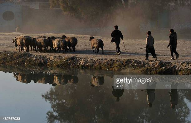 Afghan shepherd children walk with their sheep past a canal on the outskirts of Jalalabad Nangarhar province on January 15 2014 The Afghan economy...