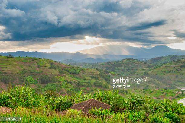 afican fields - green farmland in the heart of africa - democratic republic of the congo stock pictures, royalty-free photos & images