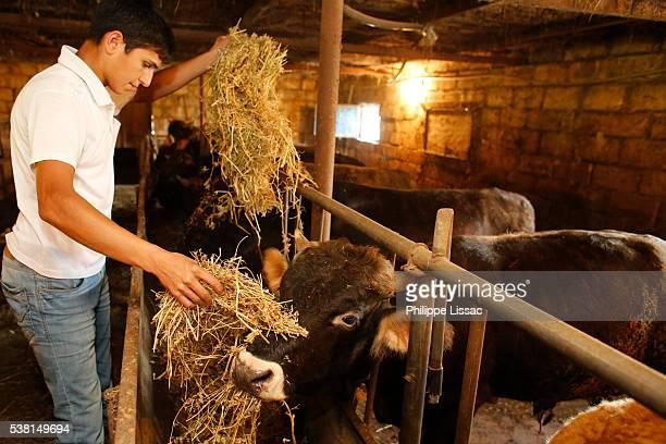 Afik Ehtiram working in his family's farm financed by a AZ 5,000 loan from from FINDEV Finance for Development (third loan, 18 months reimbursement)