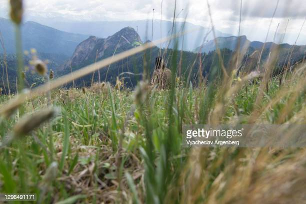 afonka valley, grass, adygea, caucasus mountains - argenberg stock pictures, royalty-free photos & images