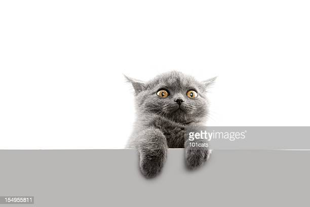 afraid - cat family stock pictures, royalty-free photos & images