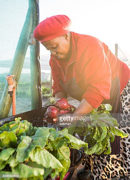 Afrcian woman washing harvested vegetables