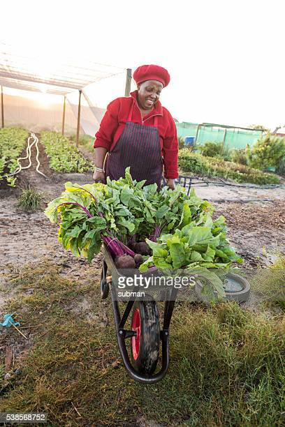 Afrcican woman pushing wheelbarrow with harvested vegetables