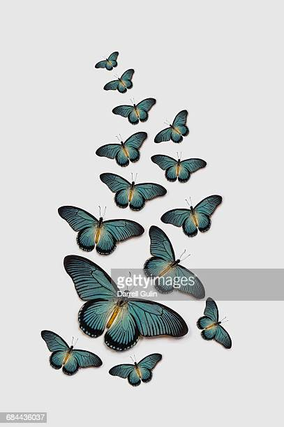 Africa Blue Swallowtail Butterfly Papilio zalmoxis
