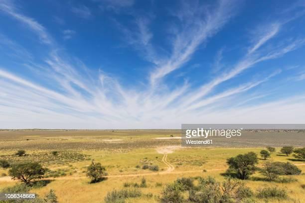 africa, botswana, kgalagadi transfrontier park, kalahari, polentswa pan and waterhole - waterhole stock pictures, royalty-free photos & images
