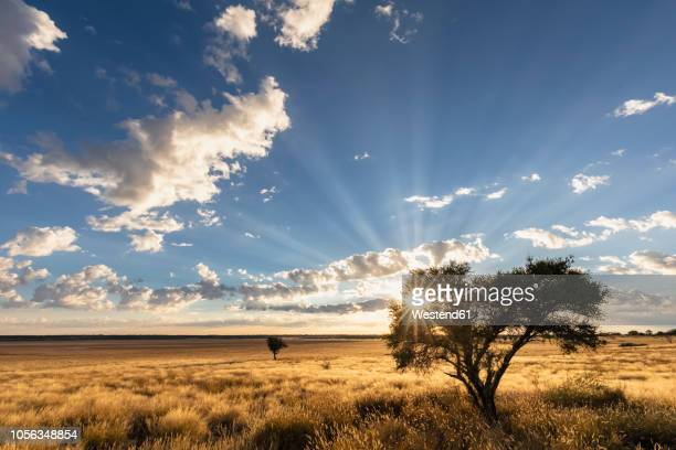 africa, botswana, kgalagadi transfrontier park, mabuasehube game reserve, mabuasehube pan at sunrise - horizon over land stock pictures, royalty-free photos & images