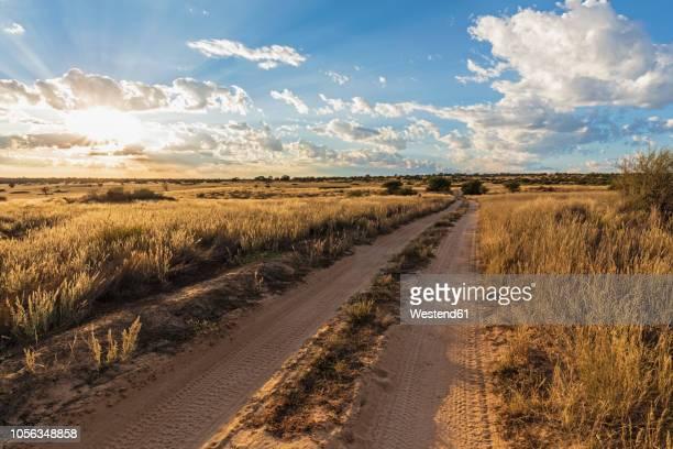 africa, botswana, kgalagadi transfrontier park, mabuasehube game reserve, sand track at sunrise - kalahari desert fotografías e imágenes de stock