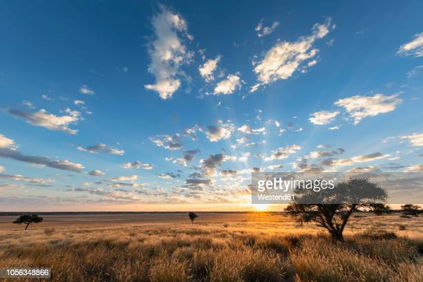 africa, botswana, kgalagadi transfrontier park, mabuasehube game reserve, mabuasehube pan at sunrise - nature reserve stock pictures, royalty-free photos & images
