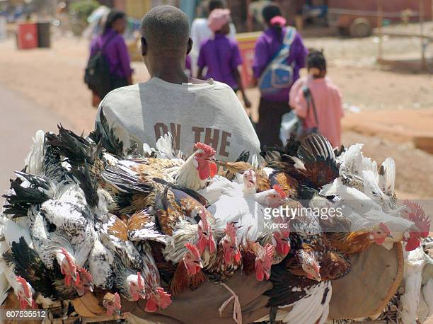africa, burkina faso, view of chicken seller riding bicycle (year 2007) - ワガドゥグ ストックフォトと画像