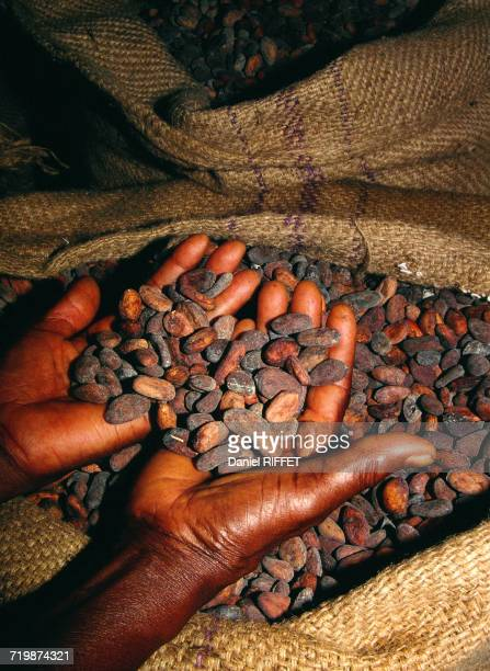 Africa, Central Africa, Cameroon, cocoa plantations, cocoa beans after drying, cooperative