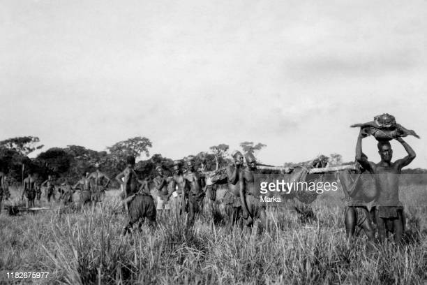 Africa congo Belgian members of the tribe Mangbetu transporting meat from pygmies 192730