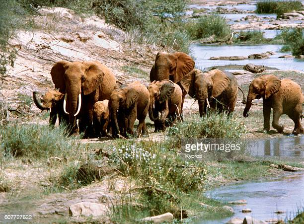 Africa, East Africa, Kenya, Tsavo East National Park, View Of Elephants (Year 2000) ... First Seen In Eight Months Of Driving. Most Have Been Eaten. 'n'n