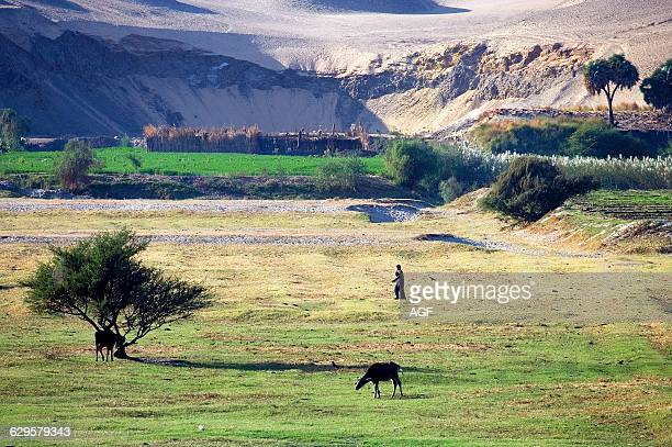 Africa Egypt The Nile Valley