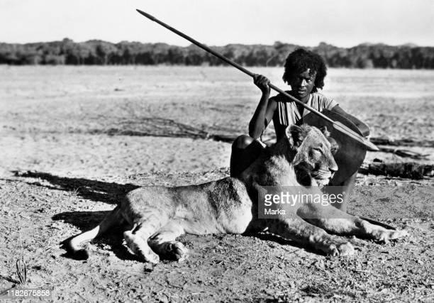 Africa, ethiopia, capture of a lion, 1920-30.