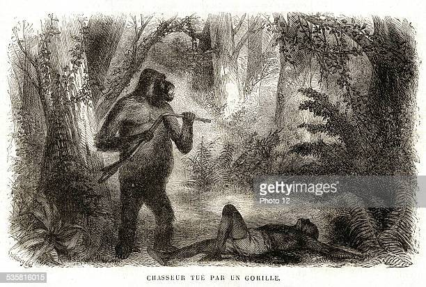 1864 Africa Hunter killed by a gorilla